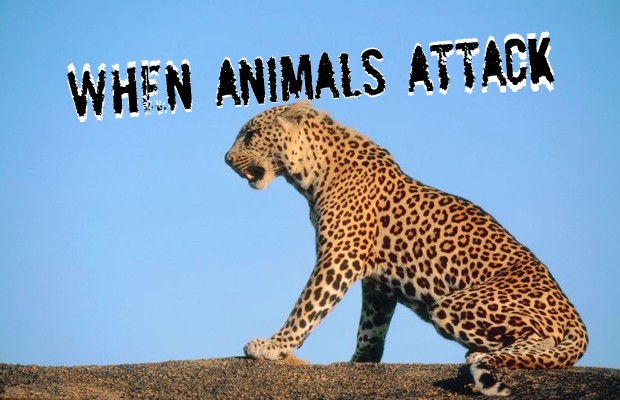 Animals attack 11/22